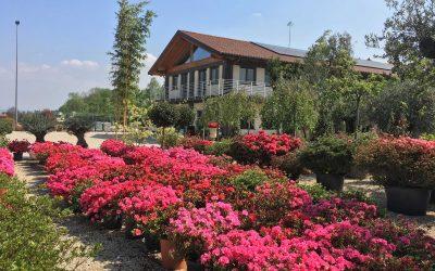 Giardini ornamentali